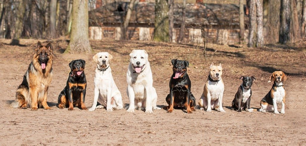 8-dogs-1024x488