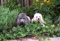 Rudy & Rocky