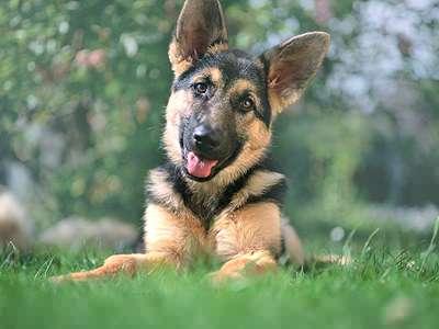 Dog Obedience Training Classes York Pennsylvania
